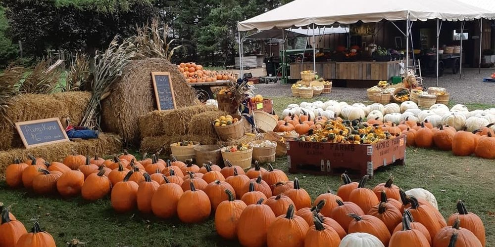 low priced 45994 f792f The 5 Best Places Nearby to Pick-Your-Own Pumpkin – Barrie 360Barrie 360