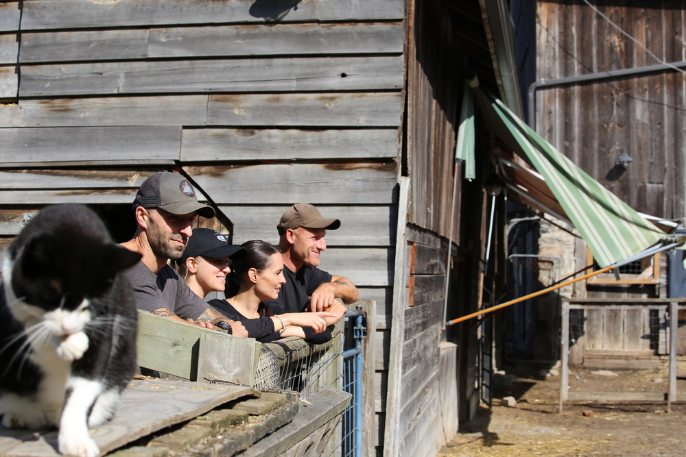 Wishing Well volunteers and Ripe Juicery owners watch pigs feeding after spreading out pulp