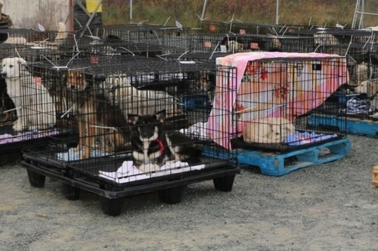 GROUP OF DOGS RESCUED FROM REMOTE COMMUNITY LOCATED, NORTH OF THUNDER BAY
