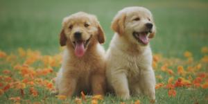 COPE Puppy training event