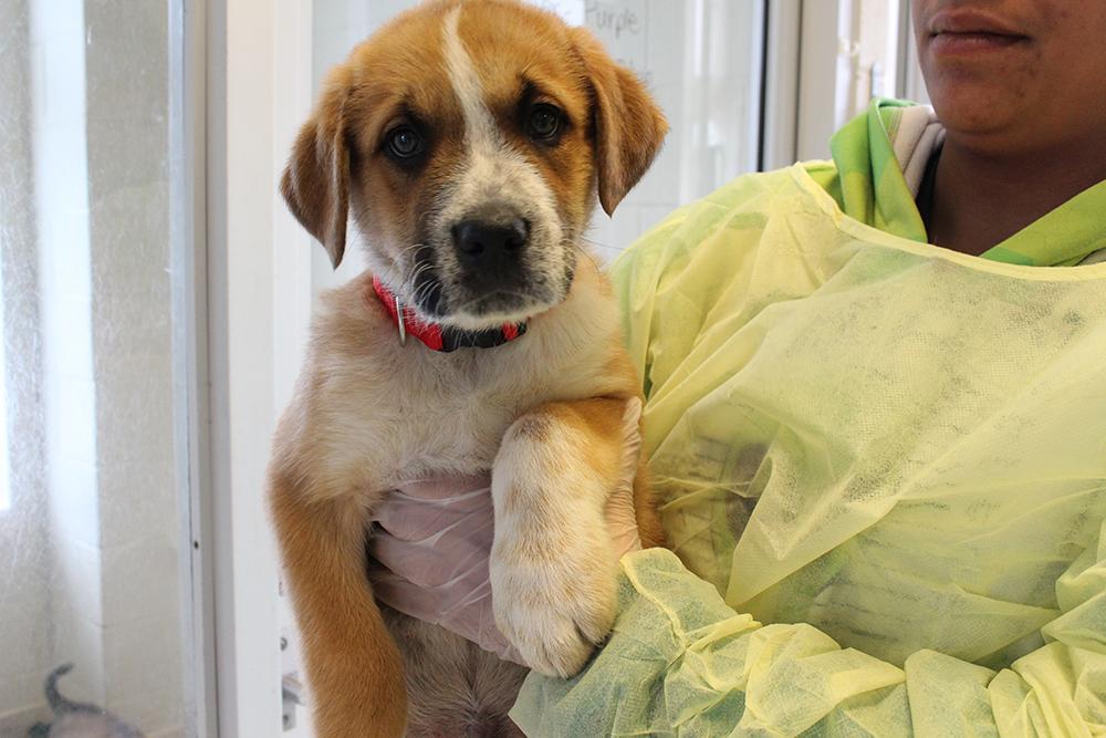Adopt a dog OSPCA northern dog rescue Midland