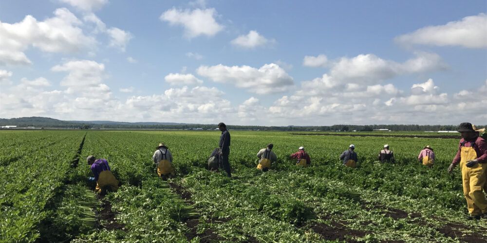 https://barrie360.com/holland-marsh-growers-association-migrant-workers-are-just-like-another-family-member/
