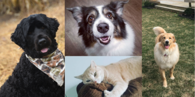Pet of the Month: July Edition