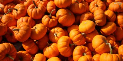 The Bradford Pumpkin Fest is almost here to celebrate all things fall!